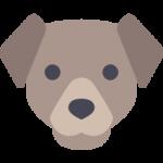 可愛い表情の犬